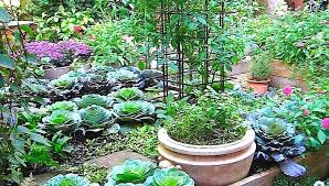 northeast gardening small vegetable gardens that grow big results