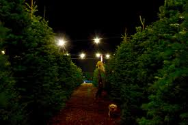 christmas local christmas tree farms near me in wv knoxville tn