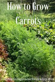 small front garden ideas on a budget archives u2013 modern garden