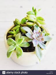 Miniature Indoor Plants by Indoor Plant Garden With Succulent Plants In A Pot With Stones