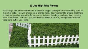 How To Keep Cats Out Of Your Backyard Pro Tips To Design A Pet Friendly Garden