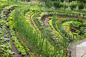 companion planting in the garden good and bad neighbours dengarden