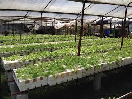 marikina twinville hydroponics farm turismo mismo