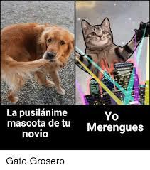 imagenes groseras de gatos la pusilanime mascota de tu novio yo merengues gato grosero meme