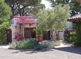 fruitless olive tree houzz