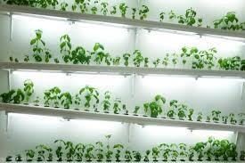 hydroponic herb garden indoor zandalus net