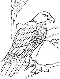african fish eagle coloring pages printable coloring sheets