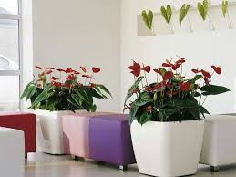 vasi da interno vasi e fioriere da interno foto 17 42 design mag