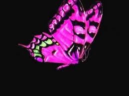 pink butterfly loop on black background