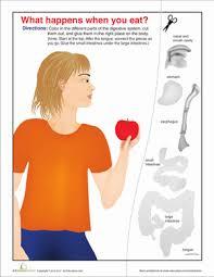 human digestive system diagram worksheet education com