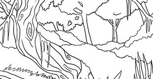 rainforest coloring pages kidsfree gekimoe u2022 14215