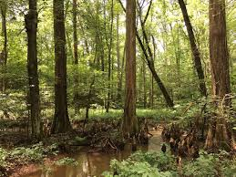 Calvert County Flag Battle Creek Cypress Swamp Wikipedia