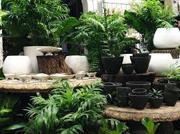 native plant nurseries melbourne indoor potted u2013 fitzroy nursery