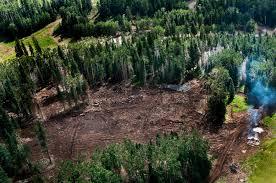 san francisco native plants san francisco peaks desecration u2013 view from above u2013 indigenous
