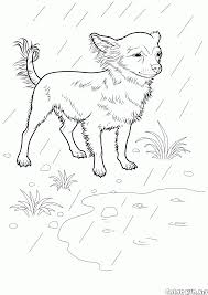 coloring page welsh corgi