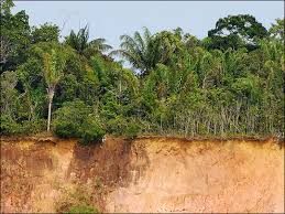Tropical Dry Forest Animals And Plants - tropical deforestation feature articles