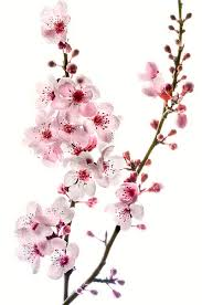 blossom tree designs best 25 blossom trees ideas on pink