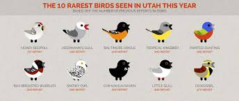 Utah birds images Utah birders 2013 year in review utah birders utah birds utah jpg