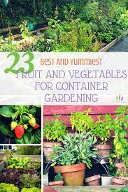 23 of the yummiest and best vegetable plants for container