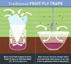 How To Really Get Rid Of Pesky Fruit Flies Fixcom - Small flies in kitchen sink