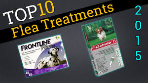 top 10 flea treatments for dogs 2015 the best flea treatments