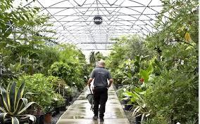 bunny guinness u0027watch it exotic plants are addictive u0027 the