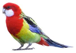beautiful birds clipart images free download