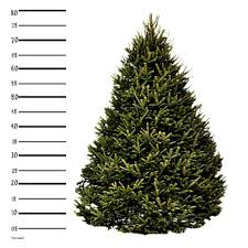 4 ft tabletop fraser fir christmas tree hilltop christmas tree