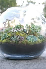 29 best terariums images on pinterest terrariums plants and