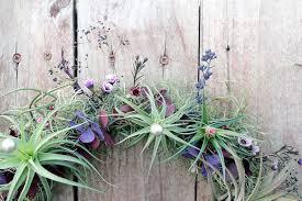 Air Plants Air Plants A Great Last Minute Gift Idea Welkes Milwaukee Florist