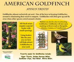 Birds In Your Backyard Birds In Your Backyard Red River Zoo Fargo Nd
