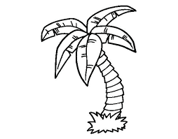 coloring pictures of a palm tree date palm tree coloring pages kids coloring palm tree coloring pages