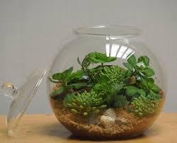 best 25 glass terrarium containers ideas on pinterest glass