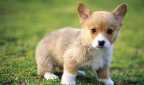 Dog Wallpapers Baby Dog Wallpapers Baby Animals