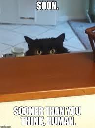 Soon Cat Meme - plotting cat memes imgflip