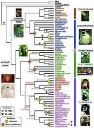free teaching resources for 14 16year olds primate evolution