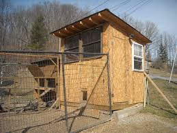 dog run as chicken run any precautions recommendations