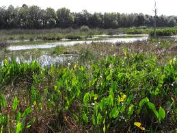 plant communities environmental nature center file photographed by david adam kess boynton beach florida