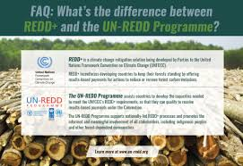 what is redd