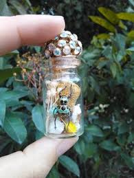 real insect glass terrarium jewelry necklace frog beetle semi