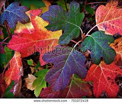 fall colors stock images royalty free images u0026 vectors shutterstock