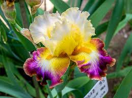 immagini di giardini fioriti visitare i giardini fioriti pi禮 belli d italia i consigli di