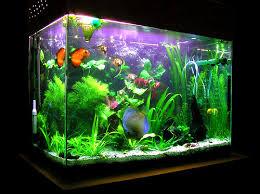 membuat aquascape bening tips dan cara mudah membuat aquarium kaca pusat kerajinan tembaga