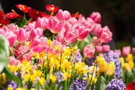 garden and flower show chicago flower and garden show 2016