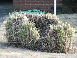 ornamental grass cutting back walter reeves the gardener