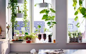 indoor gardening ideas for kids
