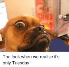 The Look Meme - tuesday memes funny pictures about tuesday
