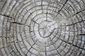 free picture tree rings weathered stump texture wood