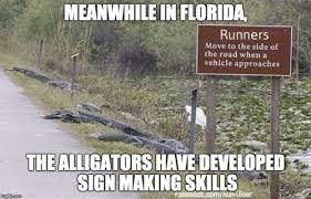 Alligator Memes - best 22 florida memes 10 so peachy