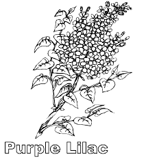 purple lilac flower coloring page flower coloring pages of